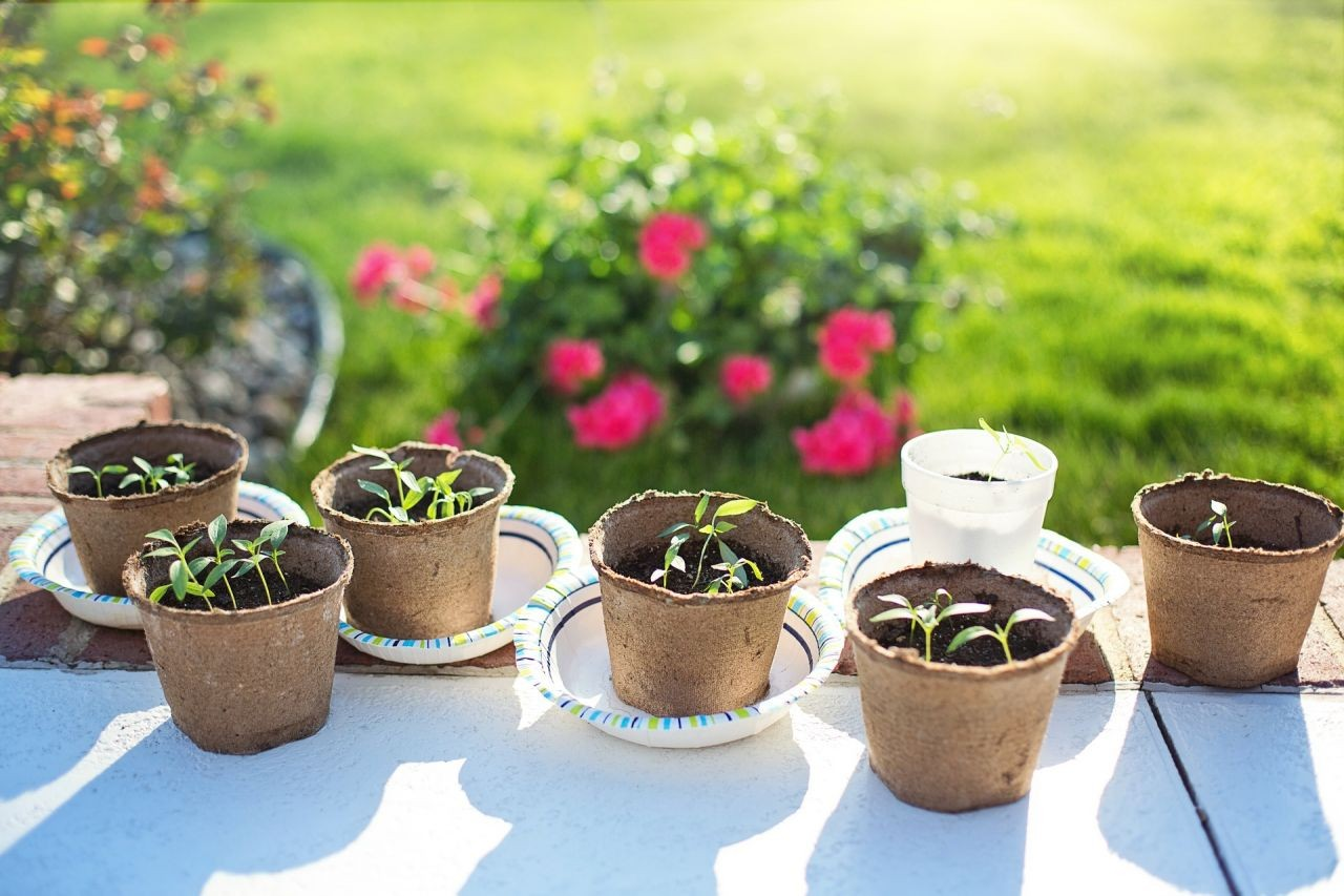 Guest Post: How to Get Your Kids to Dig Gardening
